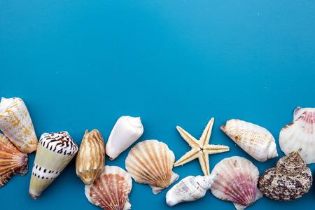seashell: colorful seashells on blue background Stock Photo