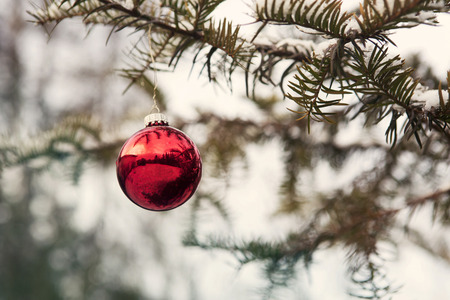 red christmas ball: red christmas ball hanging from a branch