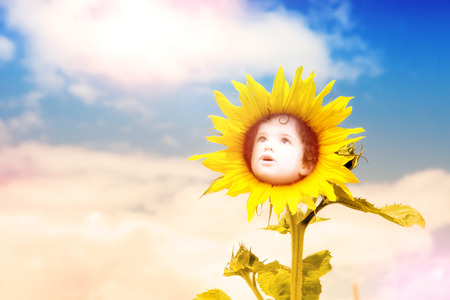 child looking up: double exposure of sunflower and child looking up in the sky