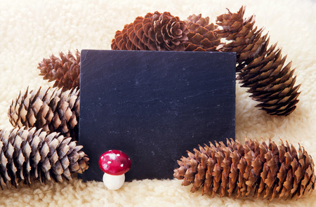 empty chalkboard with pine cones and a mushroom