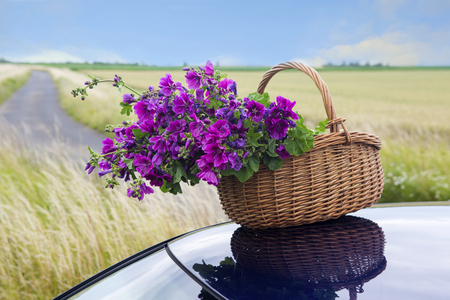 basket with purple flowers on roof of car on the countryside Stock Photo