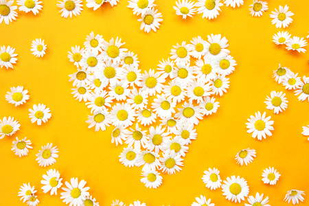 White daisies in a heart shape on yellow background