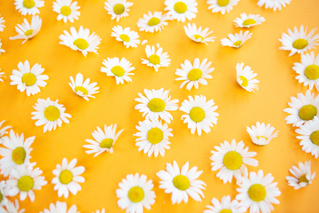 Closeup of beautiful daisies on an orange background