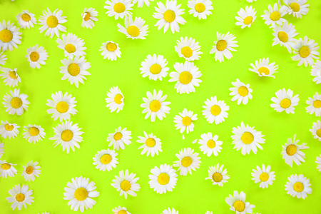Closeup of beautiful daisies on an neon green background Stock Photo