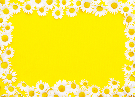 Framed yellow background with white beautiful daisies Stock Photo