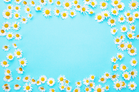 Framed blue background with white beautiful daisies Stock Photo