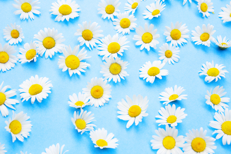Closeup of beautiful daisies on an blue background