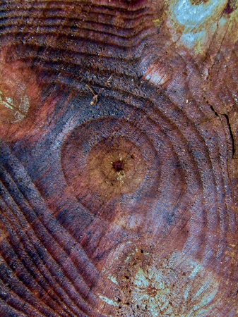 Cut tree stump with year rings in sunlight Stock Photo - 11466647