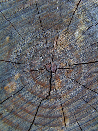 Cut tree stump with year rings in sunlight Stock Photo - 11466646