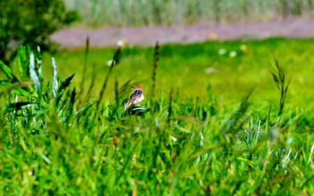 nowhere: landscape with little bird sitting alone in the middle of nowhere