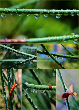 Collage of bamboo grass with rain drops Stock Photo - 17048809