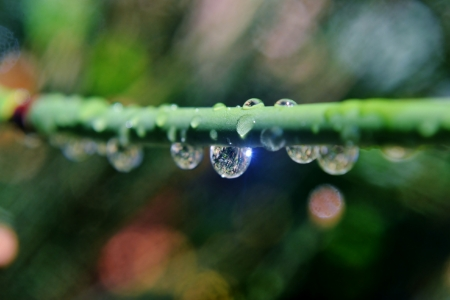 Close up of bamboo grass with rain drops photo
