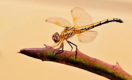Close up of Dragonfly on aloe vera photo