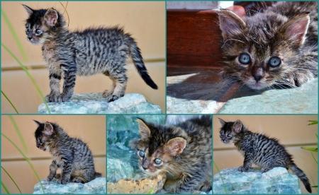 mago merlin: Merlin el gatito