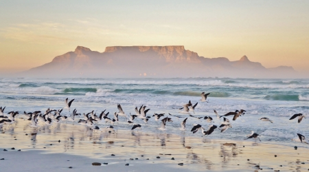 Landscape with beach andTable mountain at sunrise photo