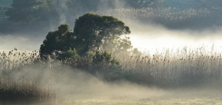 Landscape with morning fog over wetland and grass photo