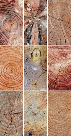 close ups: Collage with close ups of cut tree stems