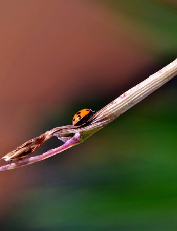 garten: Close up of a little Ladybird on a plant