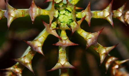 with spines: Close up of beautiful cactus with spines