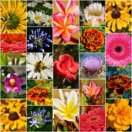 Collage with different colorful flowers photo