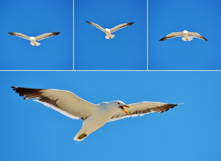 Close up of Seagull against cloudless blue sky photo