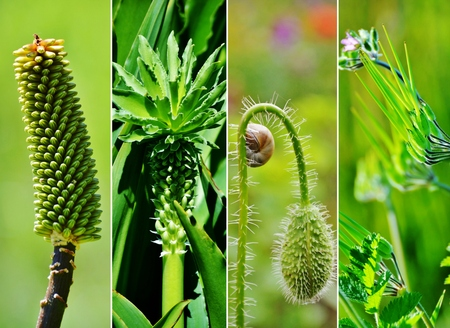 close ups: Collage of close ups on different green plants
