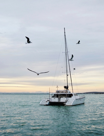 Seascape with Catamaran and seagulls in morning light photo