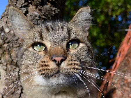 mago merlin: Close up del Merlin Gato en un �rbol