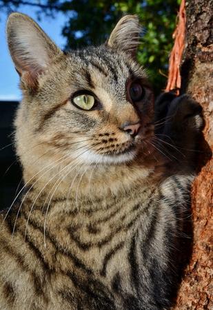 merlin: Close up de gato Merl�n en un �rbol