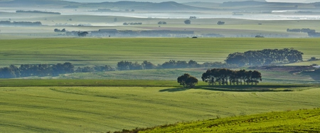 green meadows: Landscape with green meadows in morning light