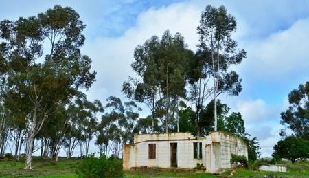 casa vecchia: Vecchia casa con alberi che crescono in parte