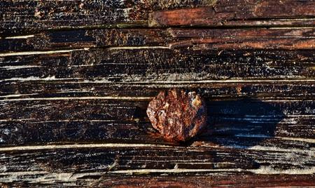 rusty nail: Cierre de madera de deriva con clavo oxidado Foto de archivo