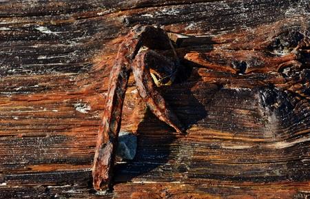 rusty nail: Primer plano de madera de deriva con clavo oxidado