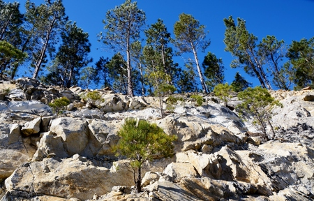 pine trees: Landscape with pine trees growing on a rock face Stock Photo