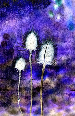 spiny: Close up of spiny Thistle with blue texture