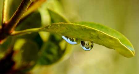 garten: Close up of rain drops on green leaf