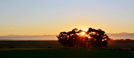 eucalyptus trees: Landscape with Eucalyptus trees at sunrise Stock Photo