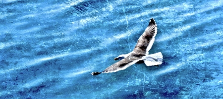 atlantic: Seascape with Seagull and Atlantic Ocean Stock Photo