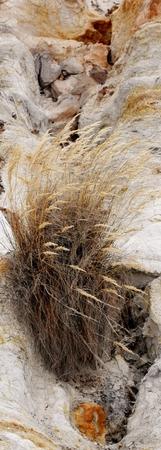face close up: Close up of grass growning on a rock face