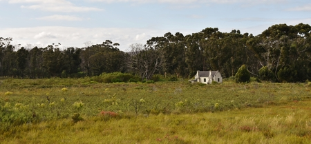 Landscape with old Farm house and Eucalyptus trees