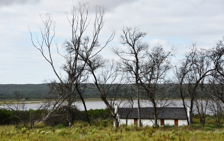 dead trees: Landscape of little Farm house under dead trees Stock Photo