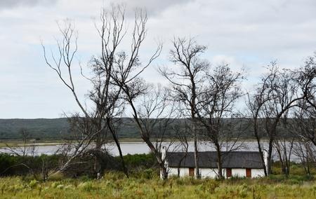 arboles secos: Paisaje de la pequeña casa de granja bajo los árboles muertos