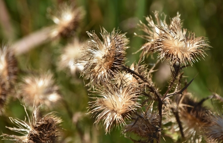 wild flowers: Close up of dried up wild flowers