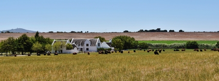 farm house: Landscape with Farm House and grazing cows