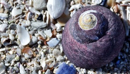 Close up of a purple sea snail house on beach sand Stock Photo