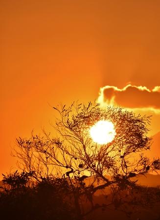 Landschaft mit schönen afrikanischen Sonnenuntergang und Eukalyptusbaum