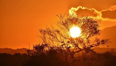 eucalyptus tree: Landscape with beautiful african sunset and Eucalyptus Tree Stock Photo