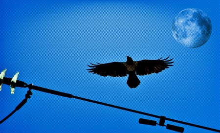 Pied crow in the sky and Full Moon Stock Photo