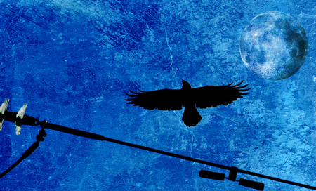 mixedmedia: Pied crow in the sky and Full Moon Stock Photo