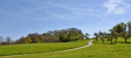 Landscape with trees and meadow on a spring day Stock Photo